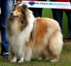 "HJ. Champion Holiday Golden Blameless ""Kathy"""